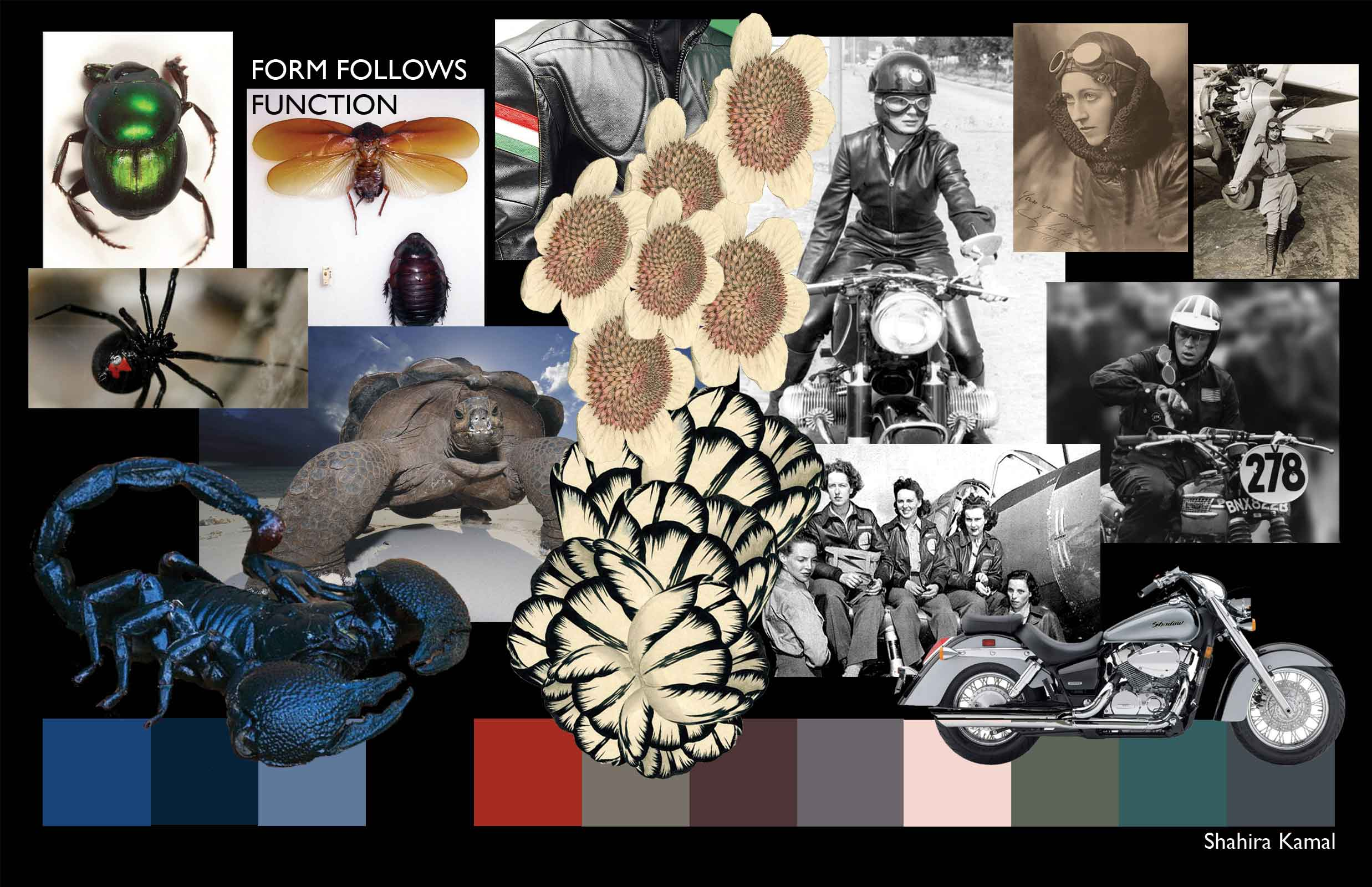 Form_Follows_Function_Concept_and_Color